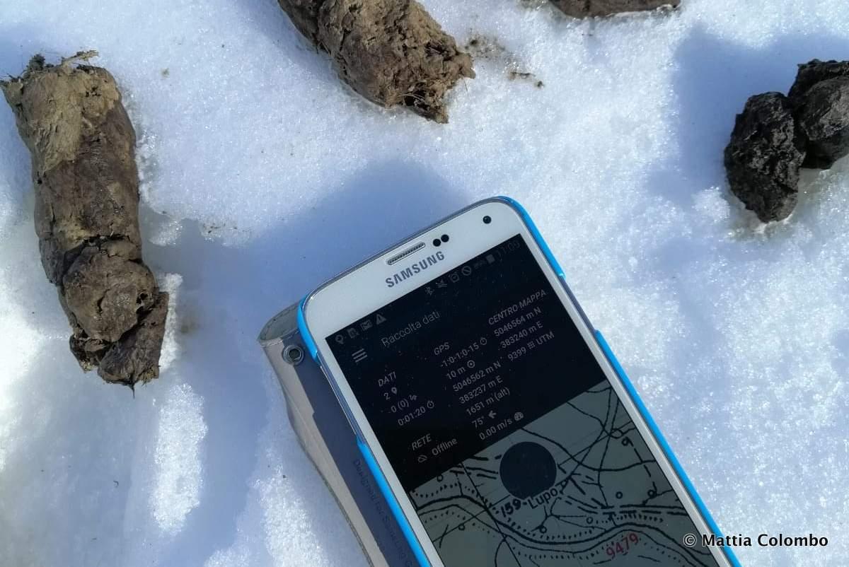 Monitoring der Wolfspopulation in den Alpen