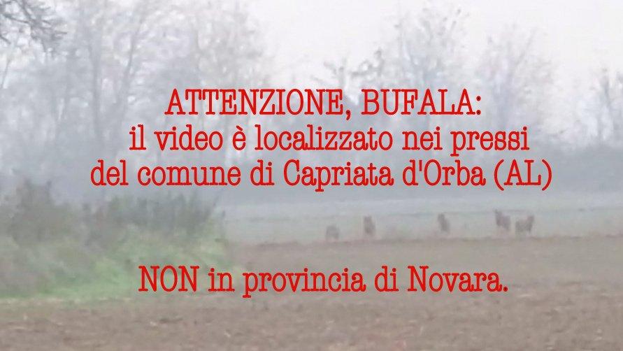 I lupi di Novara... sono di Alessandria - Life Wolfalps EU