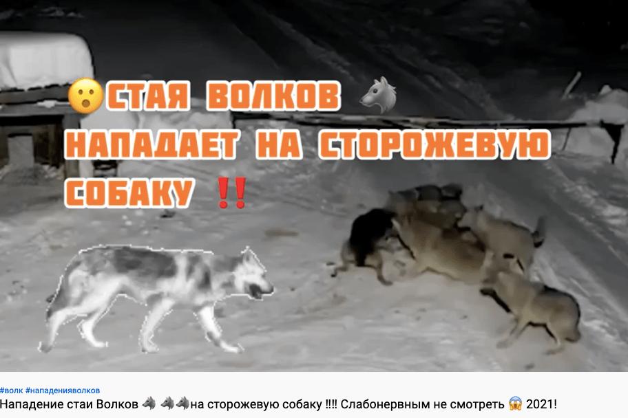 Di lupi e cani - Life Wolfalps EU