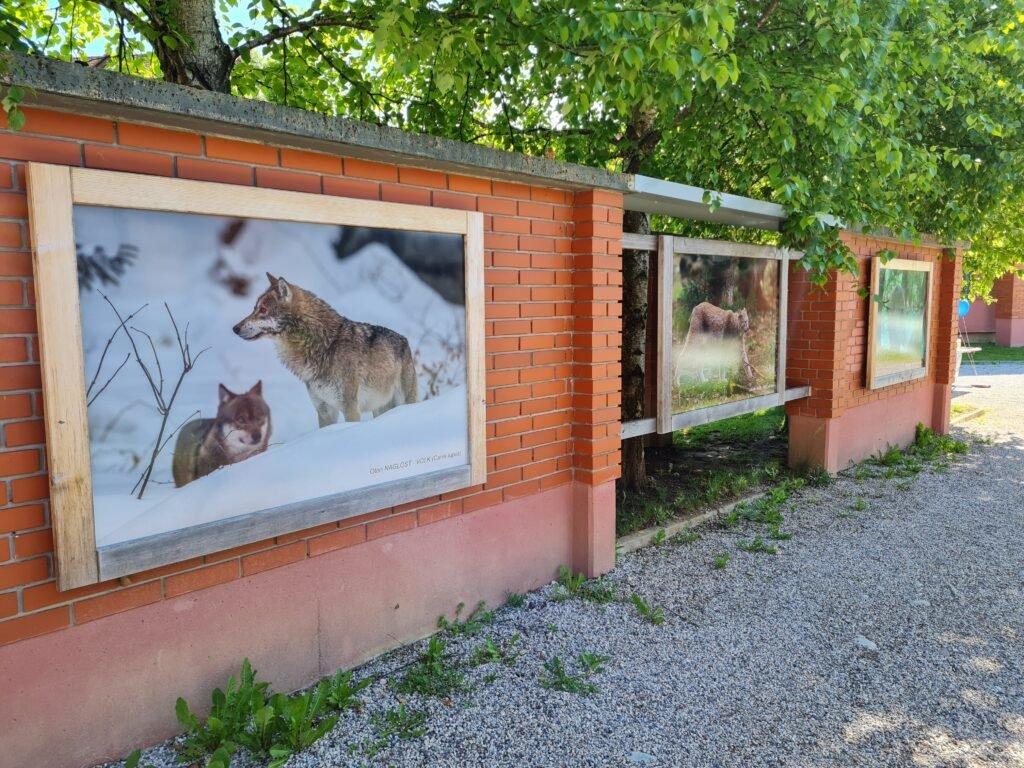 Des ateliers en plein air pour les écoliers en Slovénie - Life Wolfalps EU