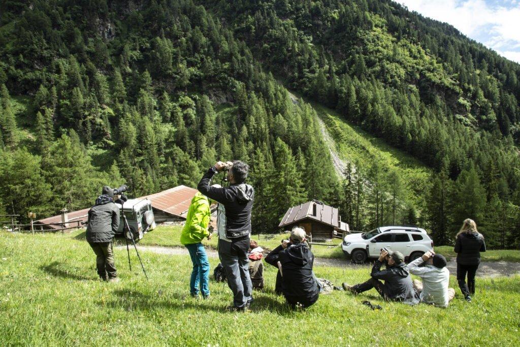 Un workshop per lo studio preda-predatore di LWA EU - Life Wolfalps EU
