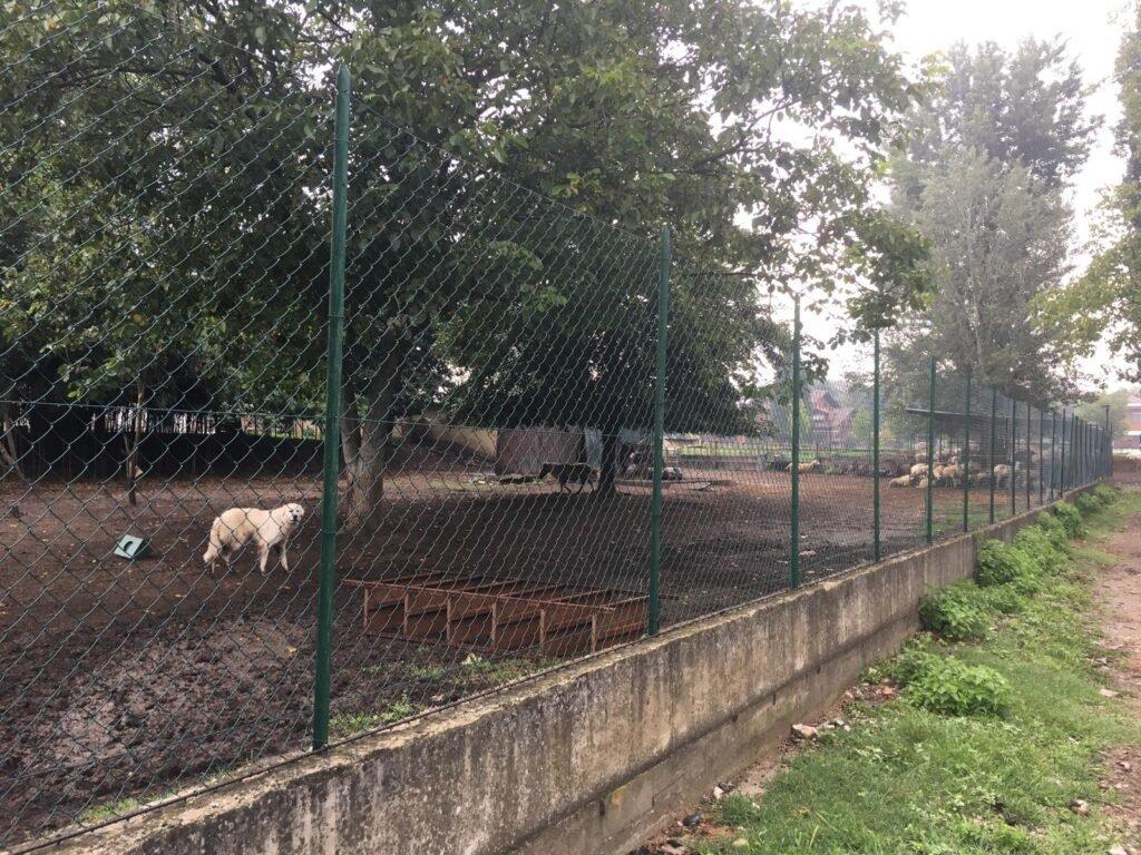 I lupi dell'isolone di Bertolla a Torino: un po' di chiarezza - Life Wolfalps EU