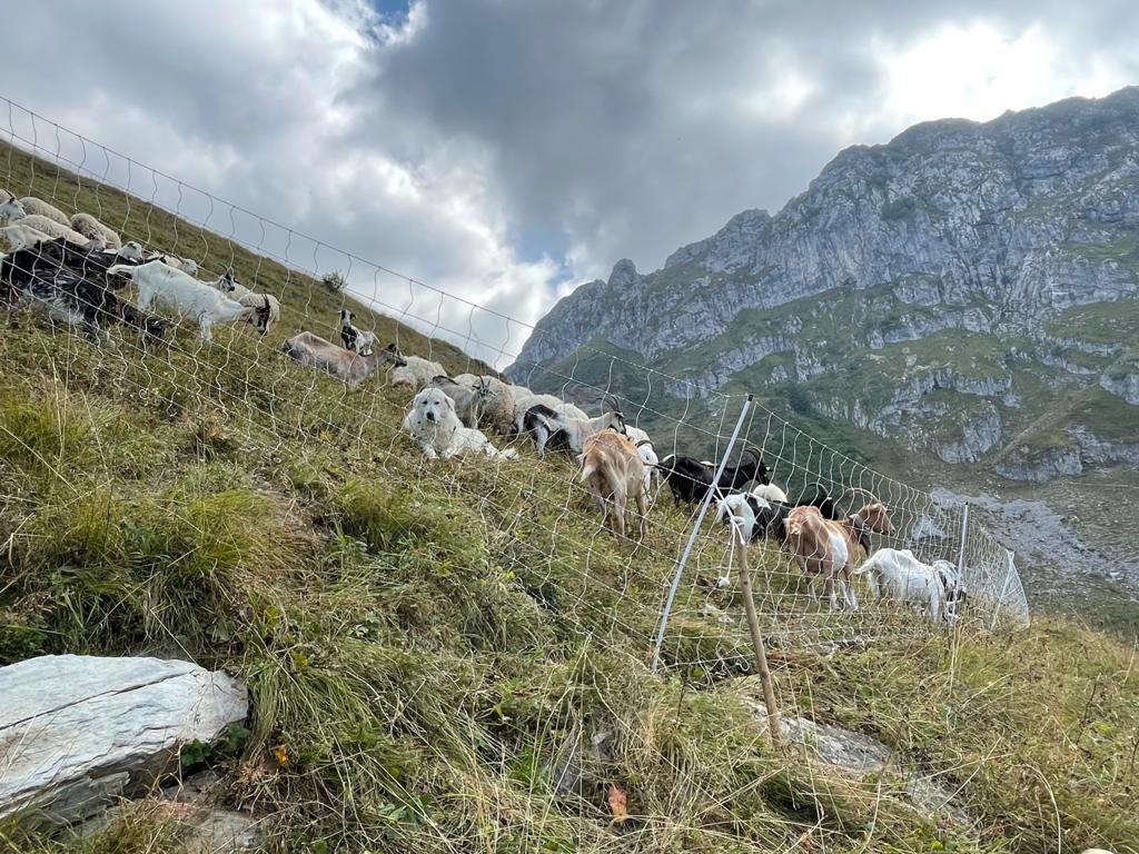 WPIU Field Visit: buone pratiche per la prevenzione degli attacchi ai bovini - Life Wolfalps EU