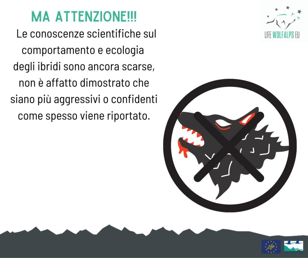 #IbriPOST: cos'è l'ibridazione - Life Wolfalps EU